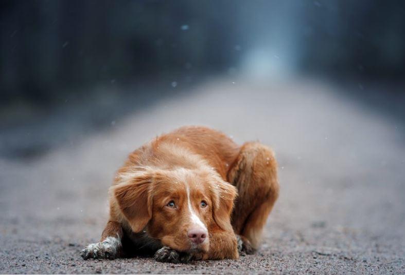 Усыплять или не усыплять: что делать с бездомными собаками?