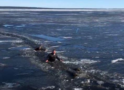 Рискуя жизнью, двое мужчин спасли собак, провалившихся под лед в Петрозаводске