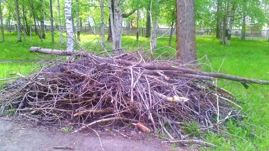 Бедным россиянам разрешили брать топоры, отправляясь в лес за валежником