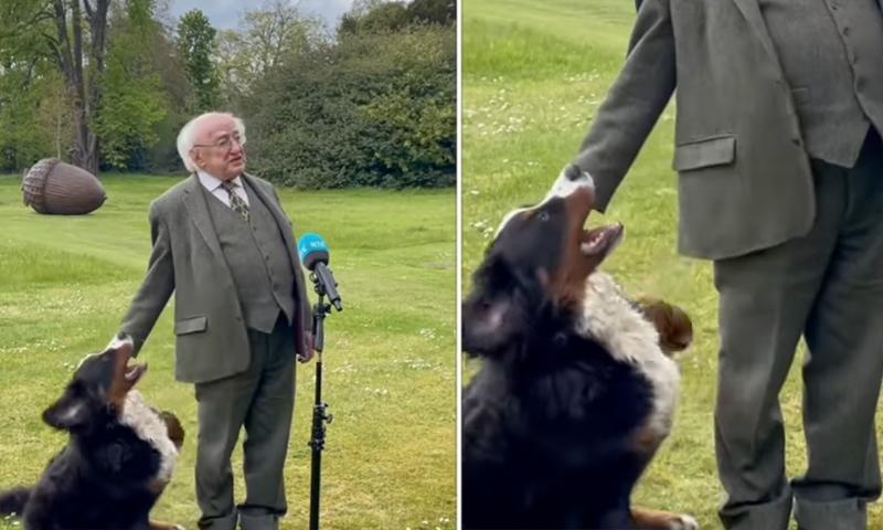 Щенок президента Ирландии умилил мир своим эгоизмом