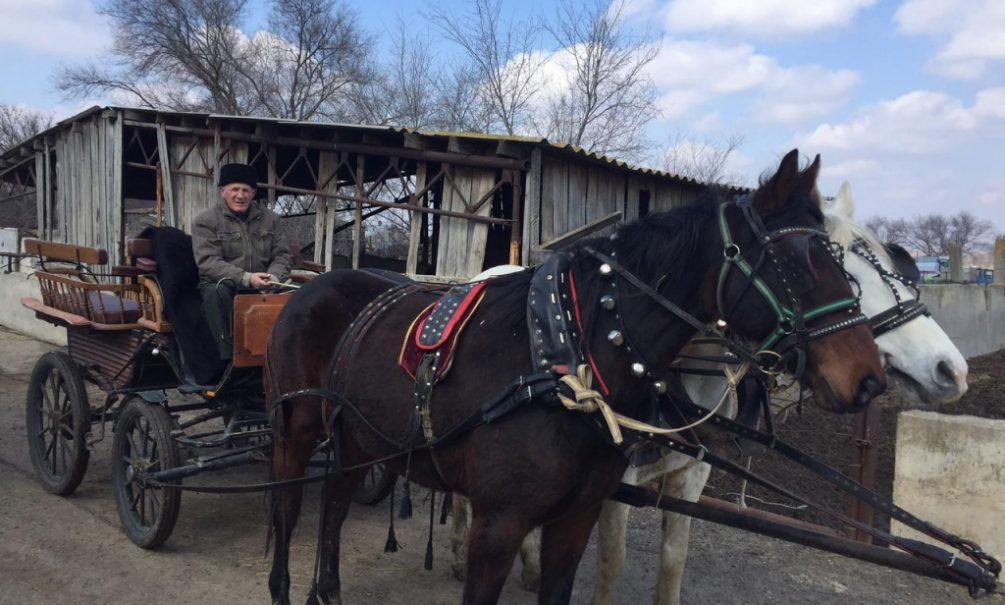 Раздавленный лошадью пенсионер не дождался помощи от фотографирующих блогеров под Волгодонском