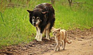 Штрафы за жестокое обращение с животными увеличат в несколько раз. Наказывать будут даже рядовых владельцев