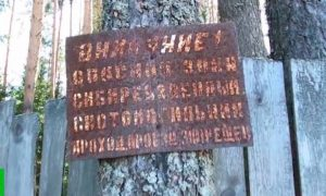 И так сойдет: нижегородским сиротам построили дома на скотомогильнике без газа и дорог