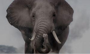 В Штатах слониха подала в суд на зоопарк. Иск приняли к рассмотрению