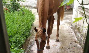 В жилом доме в центре Новороссийска по соседству с ФСБ поселилась лошадь