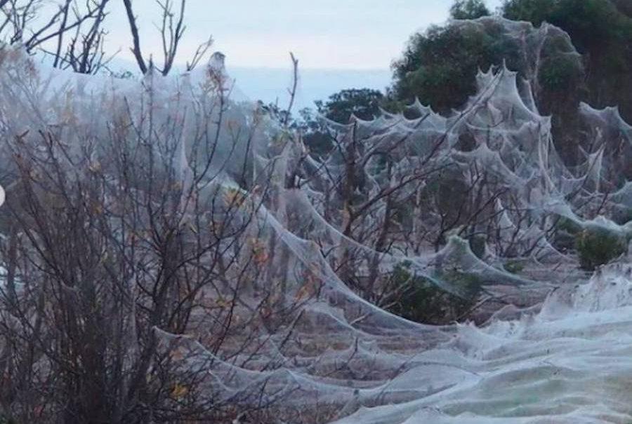 Ужас и восхищение: паучья вуаль вызвала шок у жителей Австралии