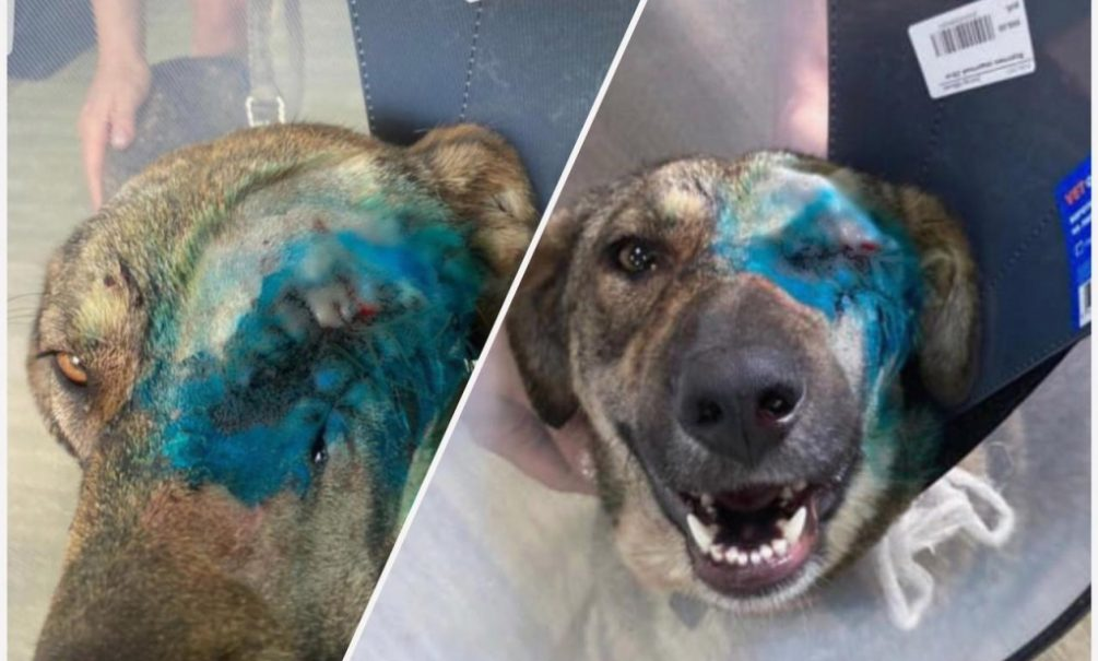 Выпал глаз, порваны мышцы: в Новороссийске жестоко и долго убивали собаку