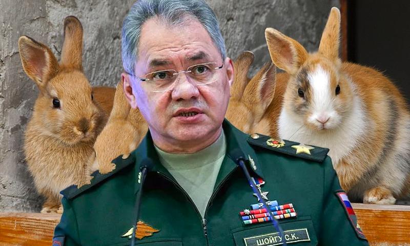 «Но зачем тебе десять кроликов?»: Шойгу назвал возможную причину гибели человечества