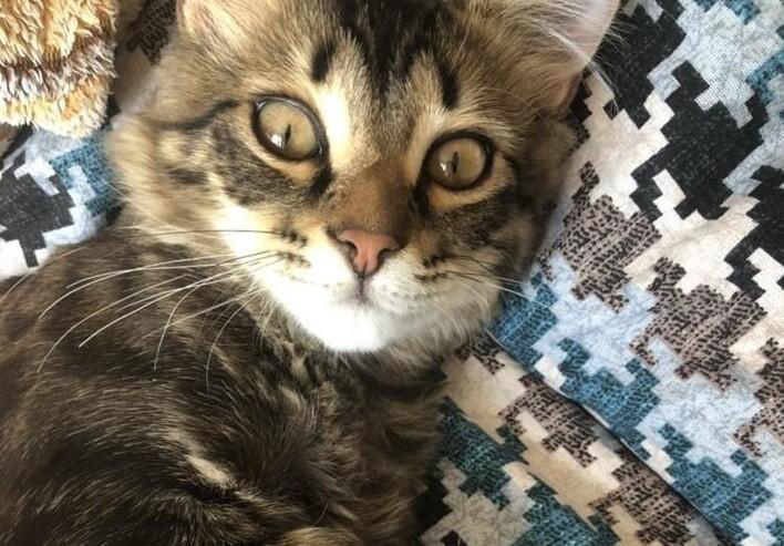 В Краснодаре за 13 млн выставили на продажу православного кота