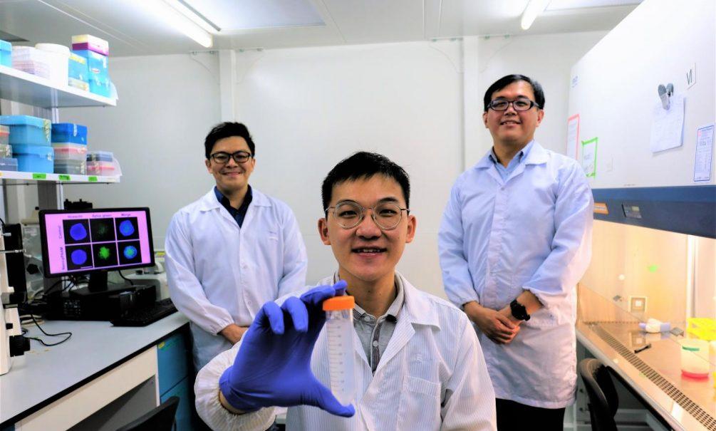Сингапурские ученые доказали, что можно сделать вакцину от всех коронавирусов сразу