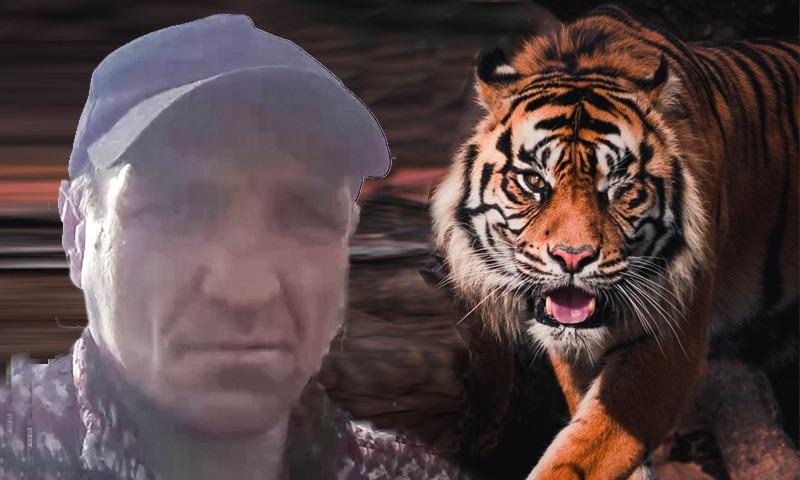 «Утащила пацана, тварь»: в Хабаровском крае амурский тигр растерзал вахтовика