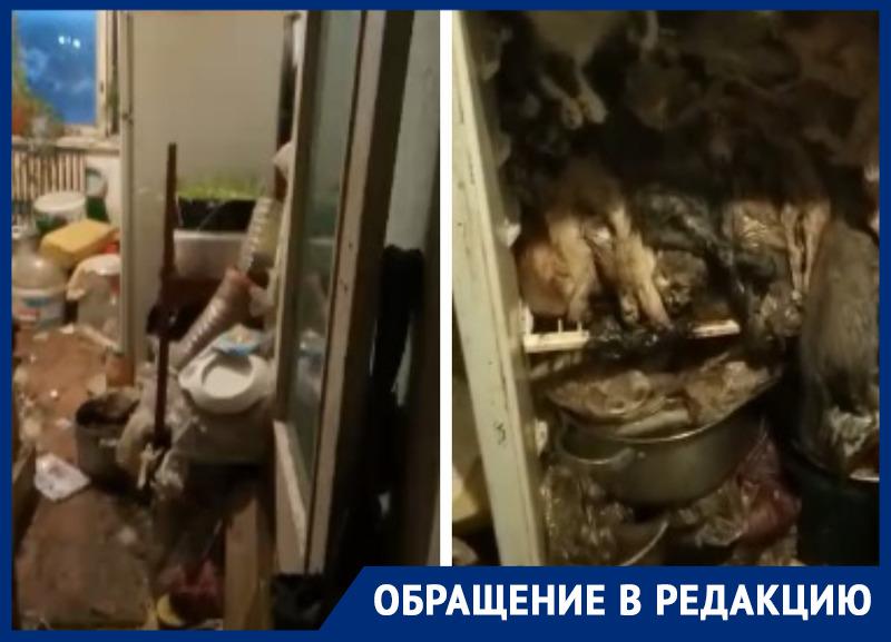 ВРостовской области выжившая изума кошатница собирала животных вквартире иморозила ихтрупы вхолодильнике