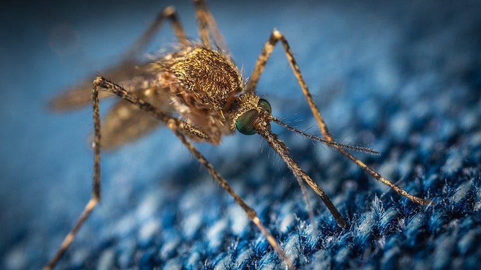 Опасные комары-переносчики лихорадки Западного Нила появятся в России осенью