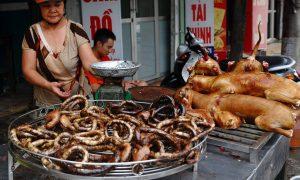Корейцам хотят запретить есть собак
