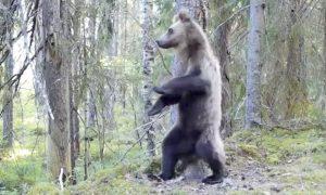 Видео дня: медведь станцевал