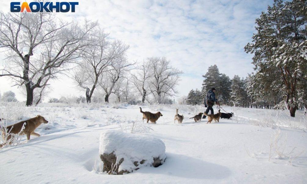 Климатолог предупредил россиян о холодной зиме с сильными морозами