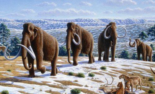 Ученые хотят заселить Сибирь клонами мамонтов для борьбы с глобальным потеплением