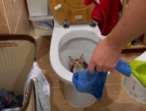 Уральские спасатели реанимировали котенка-погорельца