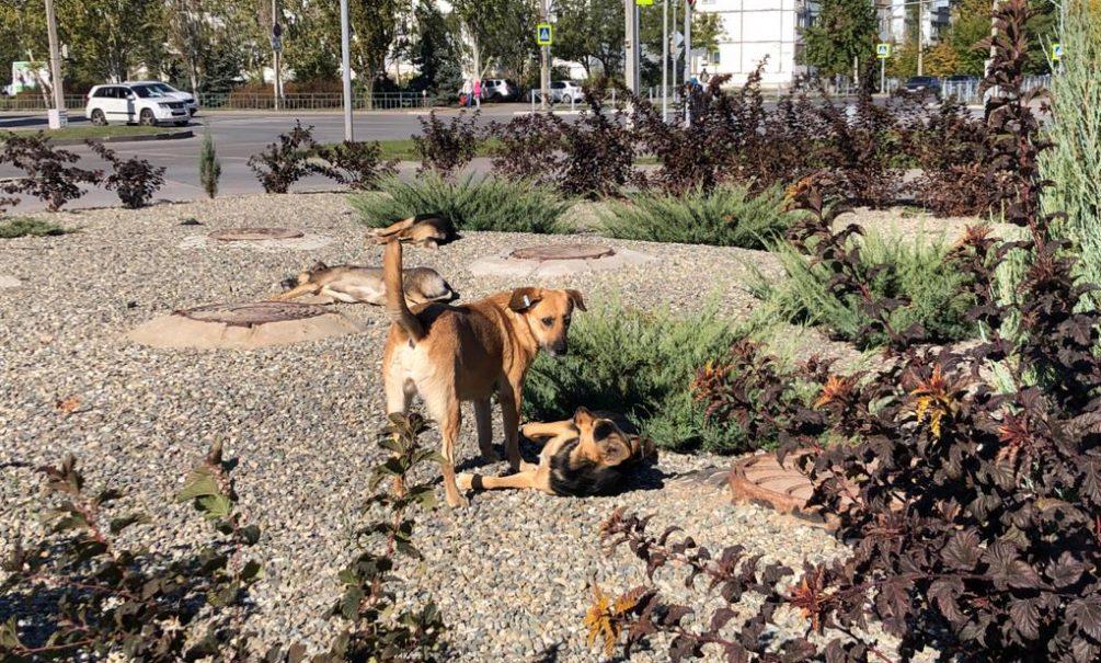 Российские города заполонили агрессивные бродячие собаки: как работает закон об ответственном обращении с животными на деле